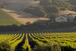 Two wineries in California